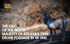 Tian Shan, Red Deer, 4k Uhd, Nature Reserve, My Animal, Conservation, The Neighbourhood, Wildlife, Videos