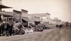 Line of Oxen in Sturgis, Dakota Territory. 1887.