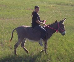 donkeys   Donkeys were and still are used for packing,