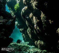 There is always another #chasm to explore on #scuba at the #greatbarrierreef - #coral #scubadiving #paditv #dive #nikon #oceanlove #fish #underwater #natureaddict #aquosity #naturelovers #uwphoto #oceans #thisisqueeensland #uwphotography #Australian #nature #animals #natural #exploringaustralia #marinebio101 #earthpix #seeaustralia #natureinside #australiagram #gbrmarinepark by aquosity http://ift.tt/1UokkV2