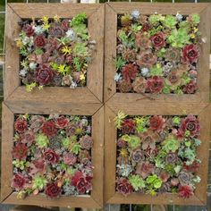 Succulent Living Wall Art, 12 inch - A Mosaic Growing and ready to hang. $100.00, via Etsy.
