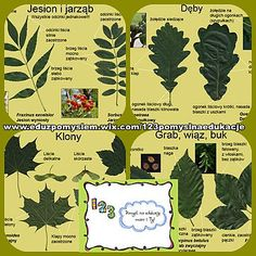 Pospolite drzewa i krzewy Herbs, Education, Homeschooling, Pictures, Polish, Projects, Herb, Onderwijs, Learning