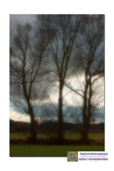 3 Bäume in Bayern