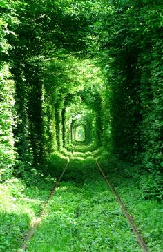 """The tunnel of love"" in Ukraine."