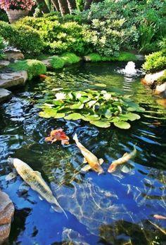 Zen garden design, Japan, with Koi--universe, bring me a back yard garden pond with this, pretty please with molasses on it. Zen Garden Design, Pond Design, Landscape Design, Goldfish Pond, Pond Waterfall, Pond Life, Water Pond, Ponds Backyard, Backyard Waterfalls