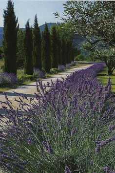 my lavender Bastide in Provence : Exteriors - Bastide de Marie : luxury property with hotel services in Provence (France) Landscape Designs, Landscape Architecture, House Landscape, France Landscape, Long Driveways, Driveway Landscaping, Landscaping Design, Pebble Driveway, Driveway Design
