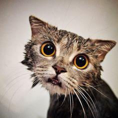 Community Post: 27 Cats Getting Baths