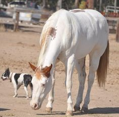 Ranch! Winchester Shotgun, American Quarter Horse, Horses For Sale, Palomino, Ranch, Animals, Guest Ranch, Animales, Animaux