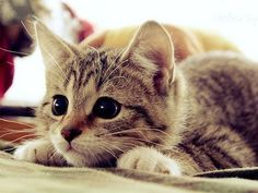 I just love cats. I think they're cute and they make me happy.