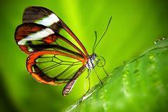 Butterfly by Alejandro Yus, via 500px