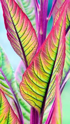Free wallpapers / backgrounds for phones with FWVGA display (resolution 480 x 854 pixels / 16:9 ratio). Nature. Flower. Plant.