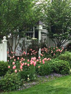 Pretty Pink Tulips – Living, Giving and Entertaining with Style and Grace Garden Cart, Herb Garden, Cottage Garden Design, Tulips Garden, Pink Tulips, Plantation, Spring Garden, Dream Garden, Backyard Landscaping