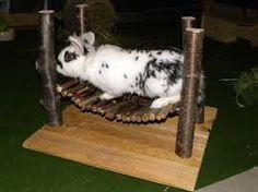 ber ideen zu kaninchen spielzeug auf pinterest hauskaninchen hasen und hasenst lle. Black Bedroom Furniture Sets. Home Design Ideas