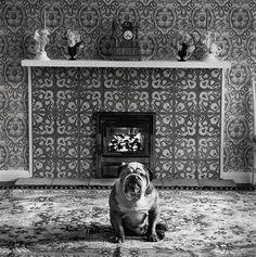 © Elliott Erwitt's Dogs - Small Edition, England, published by teNeues Photo © 2012 Elliott Erwitt / Magnum Photos Elliott Erwitt Photography, Dog Photography, Street Photography, Black And White Dog, Documentary Photographers, Magnum Photos, Dog Photos, Dog Pictures, Dog Art