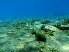 VISIT GREECE  Dive into the colourful biodiversity of the #Cretan sea. #Crete #summer #destination #visitgreece #nature #seabed #diving #Heraklion #ecology #Asterousia