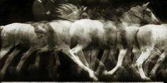 Cheval blanc monté - 1886 Etiennes Jules Marey