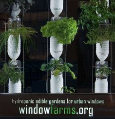 Just because you don't have a garden or the space to plant flowers or edibles in a traditional manner doesn't mean that you have to lose out. Window farms are vertical gardens that need - you guessed it - a window. We all have one of those, right? Plus, the fact that the plants are grown indoors and hydroponically means that they are less likely to be affected by seasonal changes, pests and black thumbs. Can't wait to try this out for myself! Here's their website: http://www.windowfarms.org/