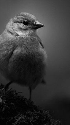 Adventure Awaits, Bird, Animales, Birds