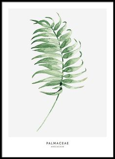 A print with a green palm frond.