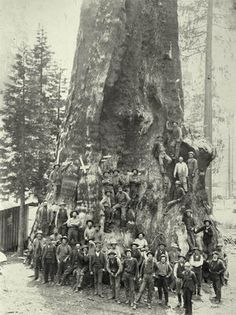 Boole Tree and loggers, 1890. Photo: San Joaquin Valley Library