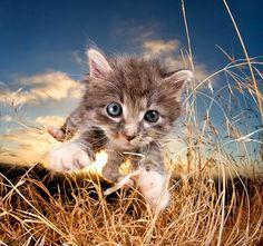 Вы когда-нибудь тратили время на то, чтобы просмотреть все фотографии котиков в Instagram, при этом ваши близкие всячески хотели вас отвлечь от воссоединения со смартфоном? Конечно же, да! И знаете…