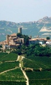The Langhe, Piemonte, Italy - The Langhe hills are in a small basin at the foot of the Maritime Alps, a region famous for its hearty mountainous cuisine that goes so well with their full-bodied red wines and excellent lesser-known whites.