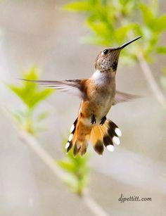 i love hummingbirds critters-and-cuteness Beautiful Birds, Animals Beautiful, Cute Animals, Beautiful Pictures, Crazy Bird, Backyard Birds, All Gods Creatures, Little Birds, Bird Watching