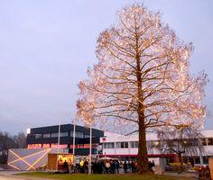 Es strahlt in Gurten  10.000 LED-Lämpchen lassen Urweltmammutbaum erstrahlen. Erstmals auch die moderne Fassade des neuen Fill Kunden- und Innovationscenters erleuchtet.
