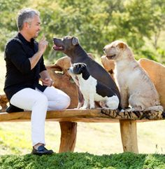 We use rewards based training, but I did learn three things from Cesar Milan: consistency, confidence, and exercise. How else would I be able to manage 3 active dogs every day. Cesar Millan, Pet Dogs, Dogs And Puppies, Dog Cat, Dog Love, Puppy Love, Dog Whisperer, Daddy, Large Dog Breeds