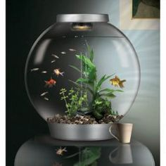 Ordinaire BiOrbs Tabletop Aquarium | Home Decorating | Pinterest | Tabletop, Aquariums  And Living Rooms