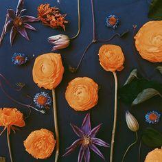 Flowers on black background by Justina Blakeney.