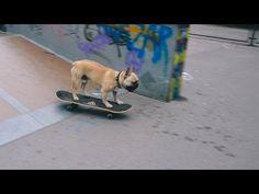 French bulldog skateboarding - YouTube