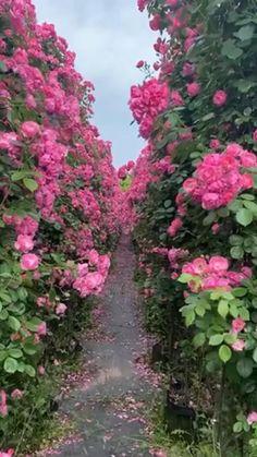 Wallpaper Nature Flowers, Beautiful Flowers Wallpapers, Beautiful Photos Of Nature, Beautiful Flowers Garden, Beautiful Nature Wallpaper, Flowers Nature, Exotic Flowers, Amazing Flowers, Beautiful Roses