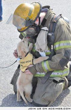 Service dog puppy meets a firefighter