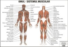 Morse Code Words, My Passion, Biceps, Lunges, Human Body, Muscle, Workout, Study, Sport