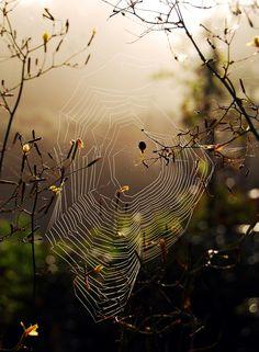 https://flic.kr/p/5oqG1r | Spiderweb | View On Black