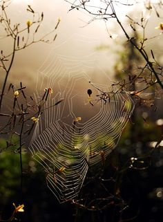 °SpiderWeb by Andrew Kearton