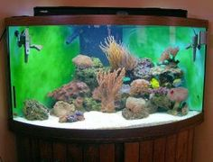 Saltwater Aquarium Set Up. Once you have planned what kind of saltwater aquarium you want and purchased everything needed to put it together, by following these 10 easy steps you can have your new aquarium set up and running in no time at all. Starting with Step 1, here's how to get the aquarium ready.: Adding More Fish