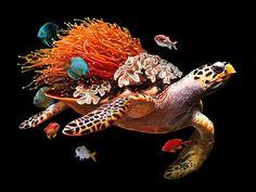 Мир, который держит черепаха на своей спине - Все интересное в искусстве и не только.