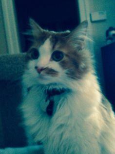 So handsome Handsome, Cats, Animals, Gatos, Animales, Animaux, Animal, Cat, Animais
