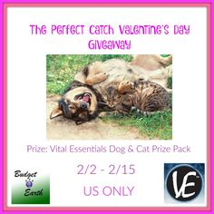 The Perfect Catch Valentine's Day Giveaway - ends 2/15!