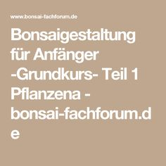 Bonsaigestaltung für Anfänger -Grundkurs- Teil 1 Pflanzena - bonsai-fachforum.de