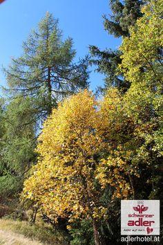Herbstzeit in Nauders am Reschenpass Winter, Summer, Winter Time, Winter Fashion