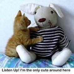 Kuuntele!  Olen ainoa söpö juttu täältä!  - Eläinten huumori Photo