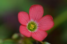 SHAMROCK by George Baggaley - Photo 120011113 - 500px