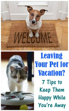 Leaving Your Pet for Vacation: 7 Tips to Keep Them Happy While You're Away