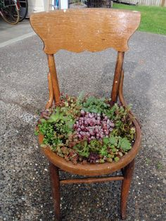 Grow succulents on an old chair succulants pinte - Bepflanzter stuhl ...