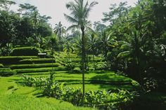 Bali Indonesia - Life Abundant Blog, Tegalalang Rice Fields Blog, Tegalalang Rice Field, Best places to visit in Ubud, Best places to visit in Bali, Bali Indonesia Blog, Best of Bali