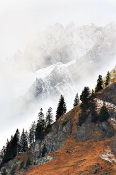 Mountain life | mountain | explore | pine trees | snow | fog | nature | nature photography | landscape photography | travel | bucket list | Schomp MINI