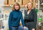 Duas aposentadas entram no negócio de embalagens de maconha no Colorado - http://anoticiadodia.com/duas-aposentadas-entram-no-negocio-de-embalagens-de-maconha-no-colorado/